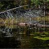 Adirondacks Essex Chain Third Lake 13 October 2018