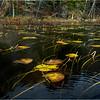 Adirondacks Essex Chain Fifth Lake 5 October 2018