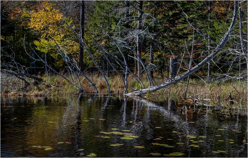 Adirondacks Essex Chain Third Lake 14 October 2018