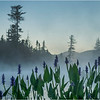 Adirondacks Forked Lake 65 July 2018