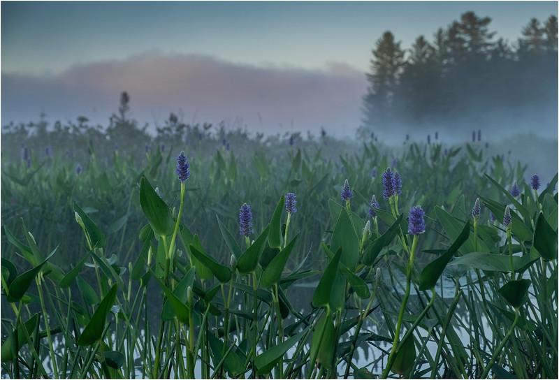 Adirondacks Forked Lake 62 July 2018