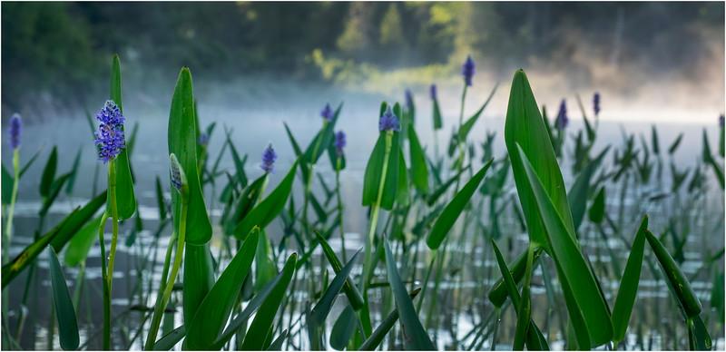 Adirondacks Forked Lake 146 July 2018