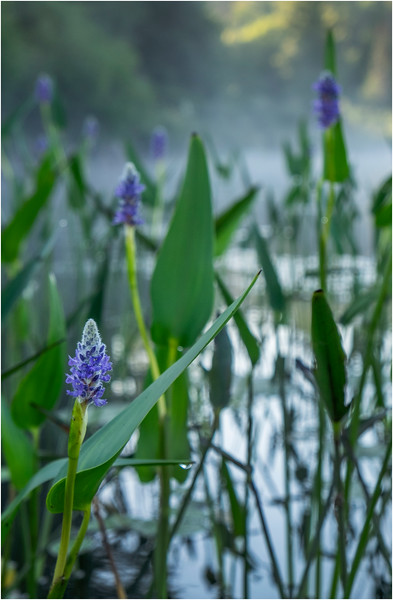 Adirondacks Forked Lake 145 July 2018