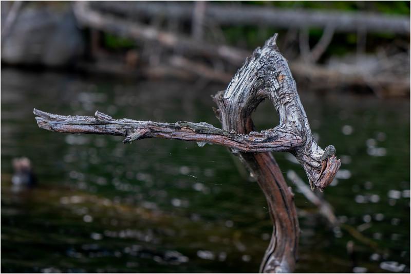 Adirondacks Squaw Lake Shoreline 30 July 2018