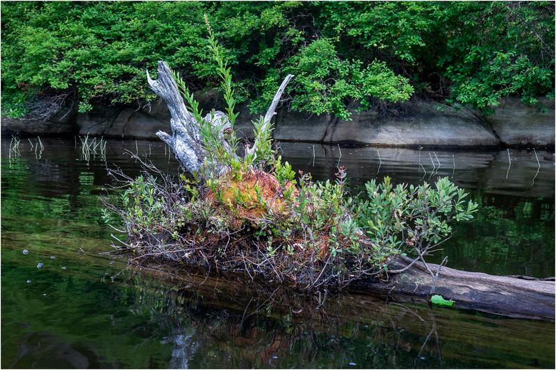Adirondacks Squaw Lake Shoreline 3 July 2018
