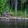 Adirondacks Squaw Lake Shoreline 29 July 2018