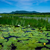 Adirondacks Cedar River Flow Hornbeck Event 12 July 2018