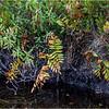 Adirondacks Middle Saranac Lake Little Weller Pond 7 September 2018