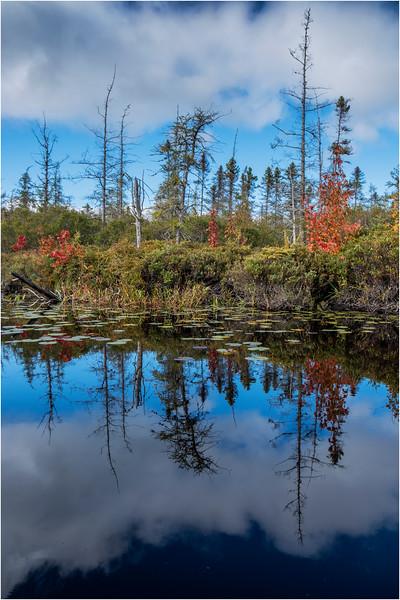 Adirondacks Middle Saranac Lake South Creek 27 September 2018