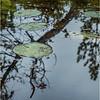 Adirondacks Middle Saranac Lake Little Weller Pond 9 September 2018