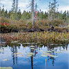 Adirondacks Middle Saranac Lake South Creek 9 September 2018