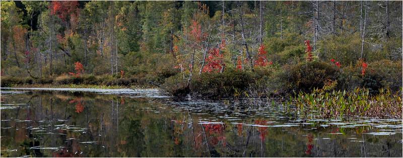 Adirondacks Middle Saranac Lake South Creek 26 September 2018