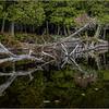 Adirondacks Middle Saranac Lake Weller Pond 46 September 2018