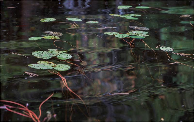 Adirondacks Middle Saranac Lake Weller Pond 12 September 2018