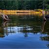 Adirondacks Seventh Lake Reeds 4 September 2018