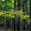Adirondacks Seventh Lake Canopy 4 September 2018
