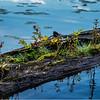 Adirondacks Seventh Lake Morning 81 September 2018