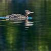 Adirondacks Seventh Lake Loon 26 September 2018