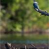 Adirondacks Seventh Lake Kingfisher 3 September 2018