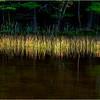 Adirondacks Seventh Lake Reeds 6 September 2018