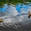 Adirondacks Seventh Lake Duck 5 September 2018