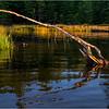 Adirondacks Seventh Lake Reeds 5 September 2018