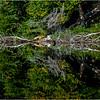 Adirondacks Seventh Lake Morning 36 September 2018