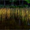 Adirondacks Seventh Lake Reeds 7 September 2018