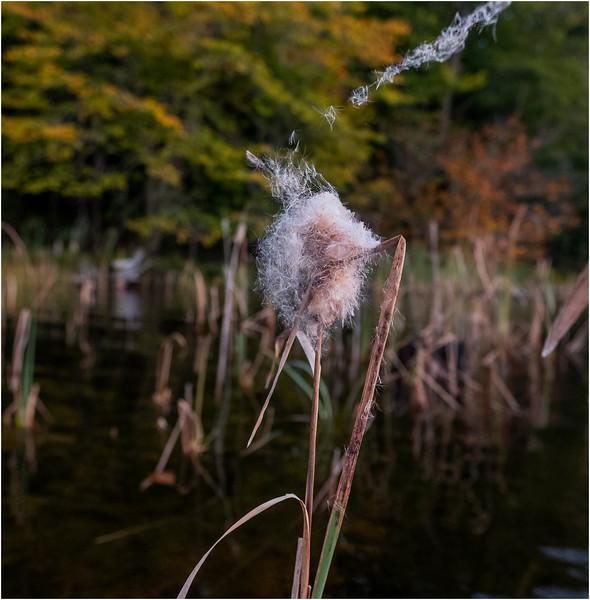 Adirondacks Seventh Lake Morning 6 September 2018