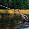 Adirondacks Seventh Lake Reeds 3 September 2018