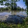 Albany NY Indian Pond UAlbany 17 July 2018