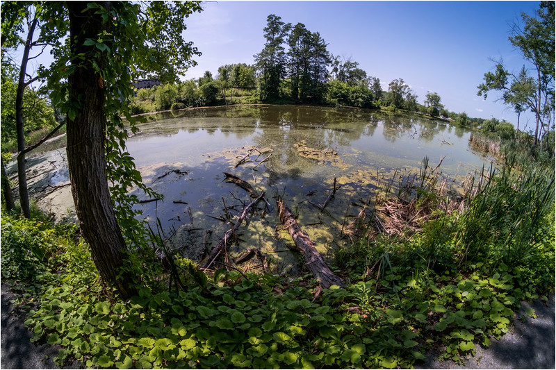Albany NY Indian Pond UAlbany 15 July 2018