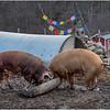Berne NY Zelenak Farm 36 December 2018