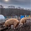 Berne NY Zelenek Farm 8 December 2018