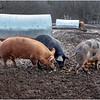 Berne NY Zelenek Farm 3 December 2018