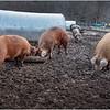 Berne NY Zelenek Farm 6 December 2018