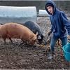 Berne NY Zelenek Farm 2 December 2018