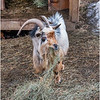 Berne NY Zelenak Farm 45 December 2018