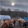 Berne NY Zelenek Farm 5 December 2018