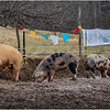 Berne NY Zelenak Farm 35 December 2018
