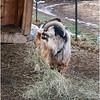 Berne NY Zelenak Farm 44 December 2018