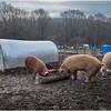 Berne NY Zelenek Farm 11 December 2018