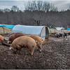 Berne NY Zelenek Farm 7 December 2018