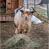 Berne NY Zelenak Farm 42 December 2018