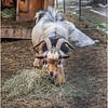 Berne NY Zelenak Farm 41 December 2018