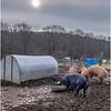 Berne NY Zelenek Farm 4 December 2018