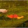 Adirondacks Lake Eaton Reflections 19 October 2019