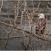 New York Cohoes Falls Overlook Eagle 3 December 2020