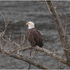 New York Cohoes Falls Overlook Eagle 14 December 2020