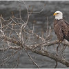 New York Cohoes Falls Overlook Eagle 13 December 2020